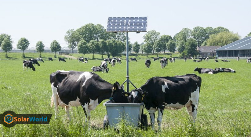 studies-show-that-solar-farms-boost-biodiversity